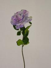 Roos open 55 cm.