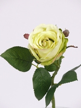 Roos Jessica 32 cm