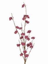 Callicarpa 99 cm