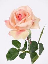 Roos Carol 37 cm.