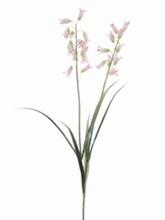 Boshyacinth 60 cm.