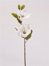Magnolia 65 cm.