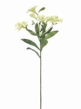 Alstroemeria 75 cm.