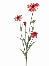 Echinacea (zonnehoed)
