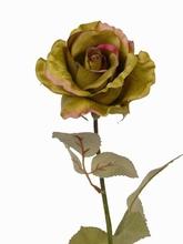 Roos 53 cm.