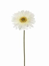 Gerbera 53 cm