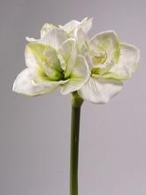 Amaryllis 73 cm