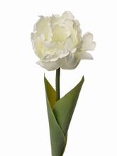 Tulp 66 cm