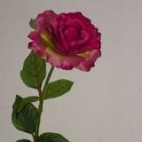 Roos  75 cm